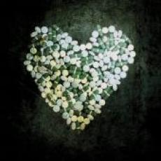 CD/DVD / Alkaline Trio / This Addiction / CD+DVD