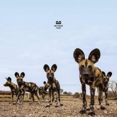 LP / Balthazar / Fever / Vinyl