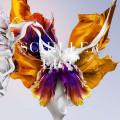 2CD / Schiller / Epic / 2CD