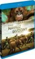 Blu-RayBlu-ray film /  Návrat do divočiny / Born To Be Wild / Blu-Ray