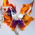 3CD / Schiller / Epic / 3CD