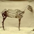 LPStokes Chadwick / Horse Comanche / Vinyl