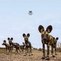 LPBalthazar / Fever / Vinyl