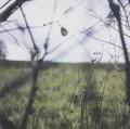 CDHood / Cycle Of Days And Seasons