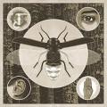 LP / Cantrell Jerry / Brighten / Vinyl